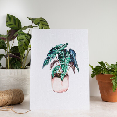 House Plant Print - Elephant's Ear