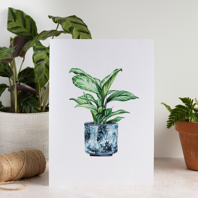 House Plant Print - Leopard Lily