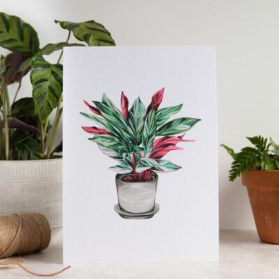 House Plant Print - Stromanthe