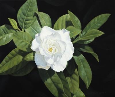 The Flower - Print