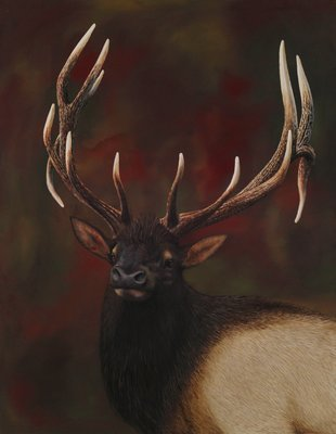Elk - Print