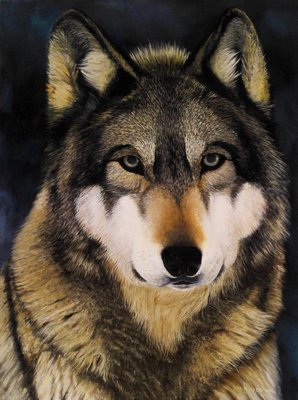 Forest Wolf - Print