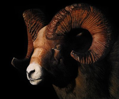Ram - Print