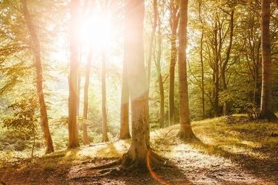 Das geheime Leben der Wälder