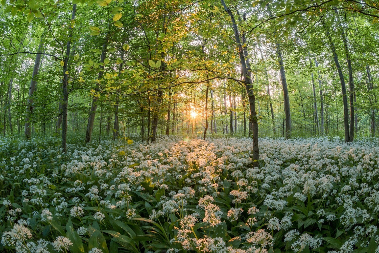 Wildkräuterwanderung im Wald