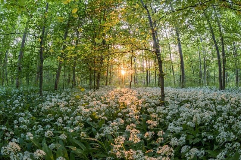 Die Vielfalt des Waldes