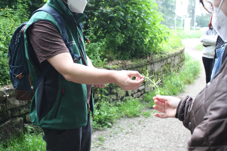 Kleine Wildkräutertouren