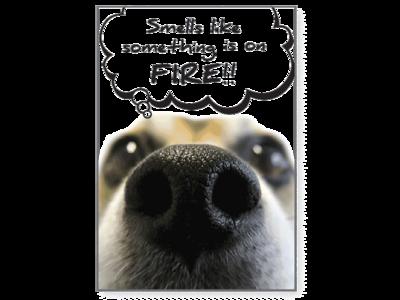 Birthday Pet Greeting Card - I Smell Something