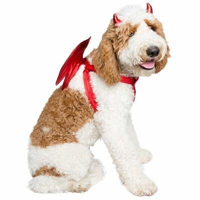 Devil Wings Costume For Dogs