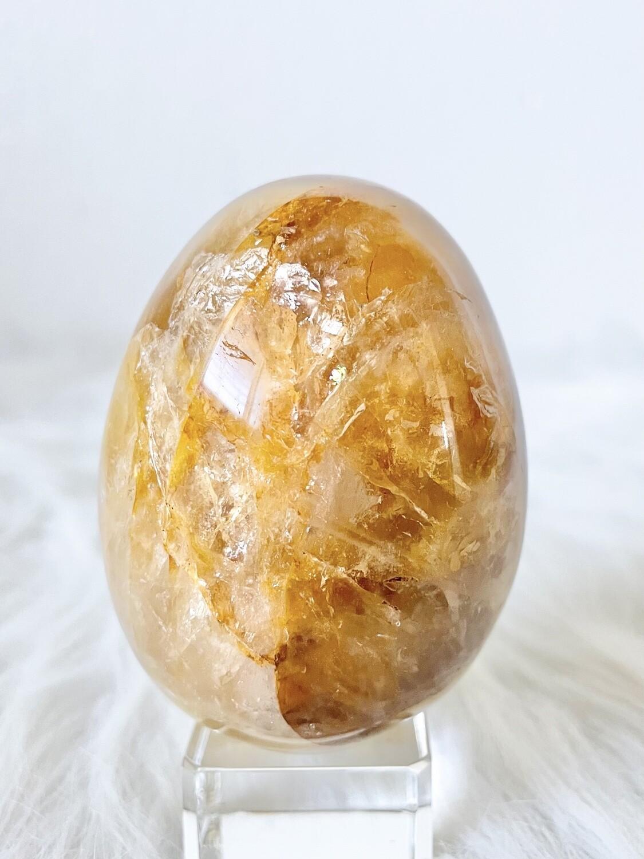 Sunlight Golden Healer Egg