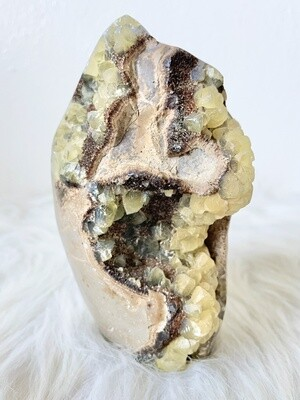 Ancient Form Septarian
