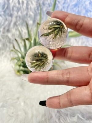 Terrarium Smoky Quartz Spheres