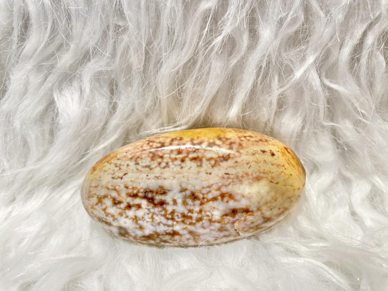 Sesame Seed Bun Ocean Jasper