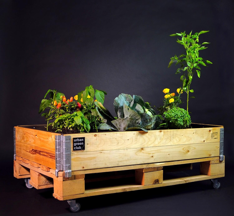 Urban Gardening Bed