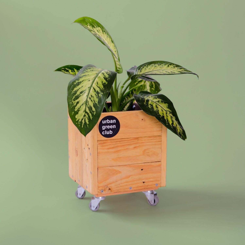 Mini Gardening Module