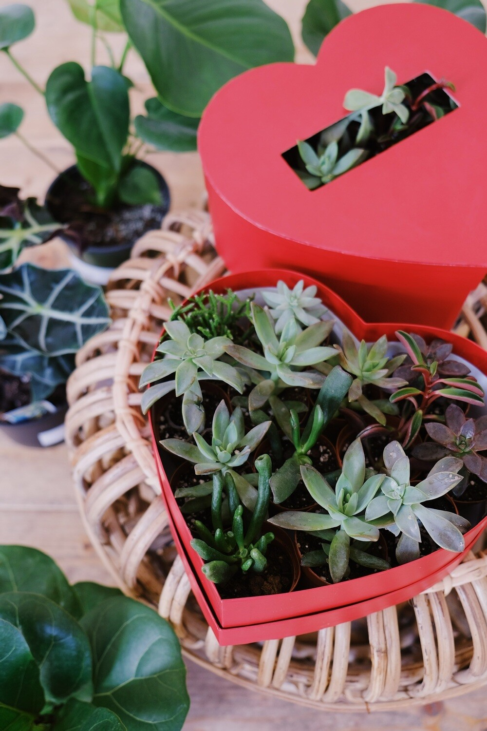 Heart Shaped Box of Succulents