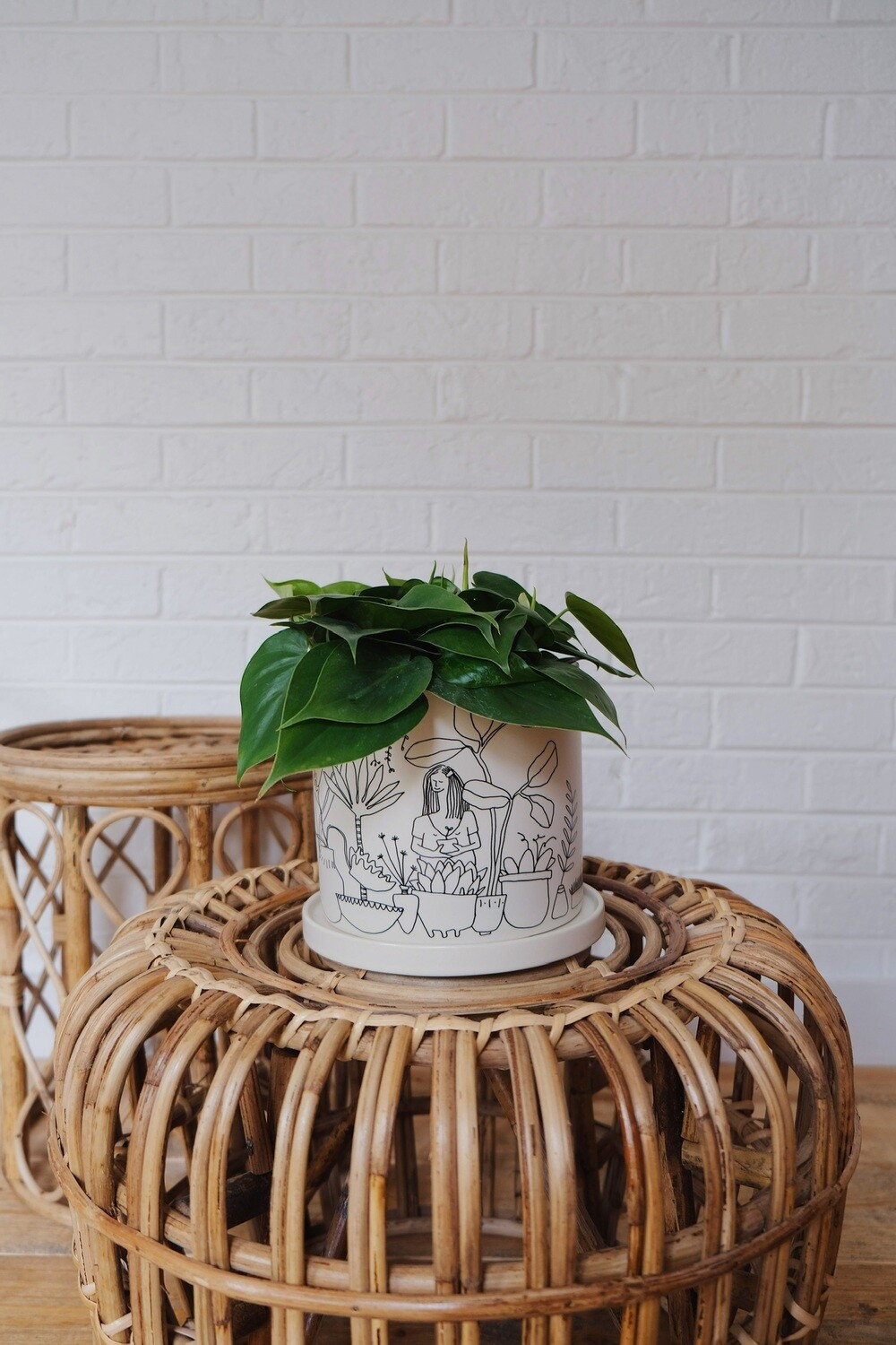 Plant Lady Heart Leaf Philodendron
