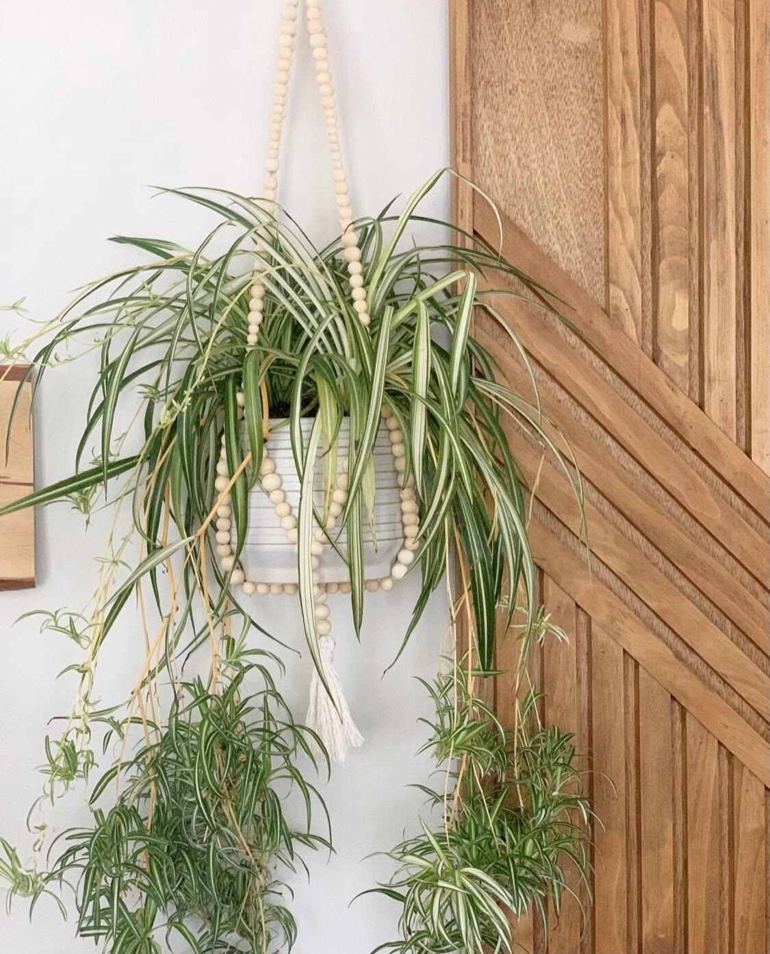 Wooden Bead Plant Hanger Workshop with Sara Buckley