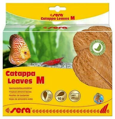 Sera Catappa Leaves Medium
