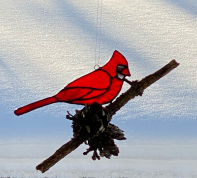 Cardinal on Natural Pine Branch