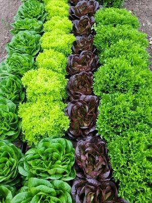 1/2lb Salanova Premium Salad Mix, Whitehurst Farms
