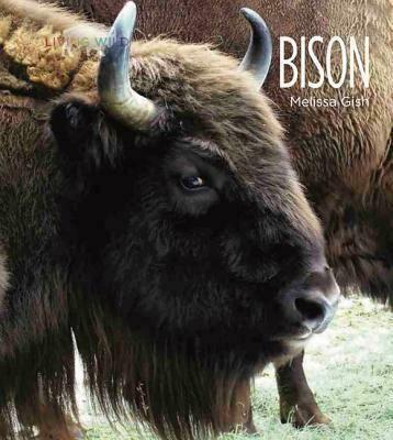 Living Wild: Bison