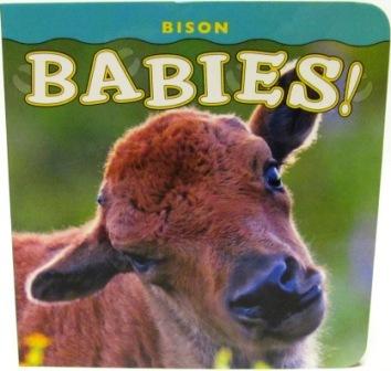 Bison Babies