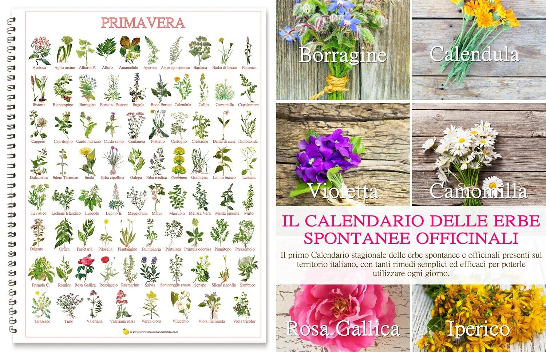 Calendario delle erbe officinali e spontanee