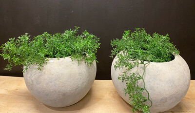 Planten Pot (Brynxz)