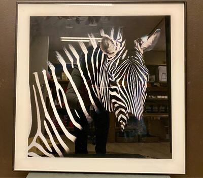 Zebra in Zwarte Lijst