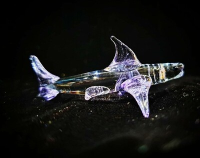 Miniature Shark