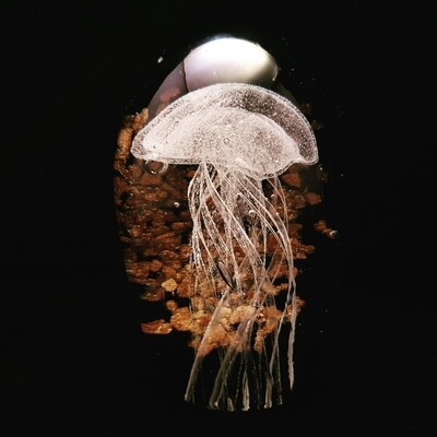 White Jellyfish with Bronze Sparkle Background * Glow in the Dark