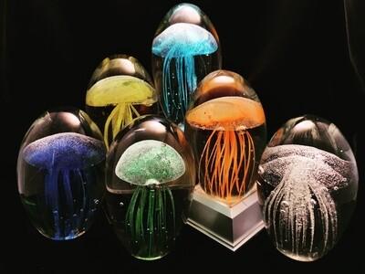 Jellyfish* Glow in the Dark