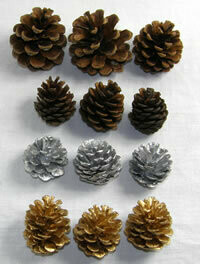 Pine cones, lots of varieties available, from £1.50