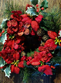 """Artificial Poinsettia Wreath A cheap and chearful artificial red poinsettia wreath based on a 7"""" plastic single ring with the foliage extending to an approximate outside diameter of 10""""."""