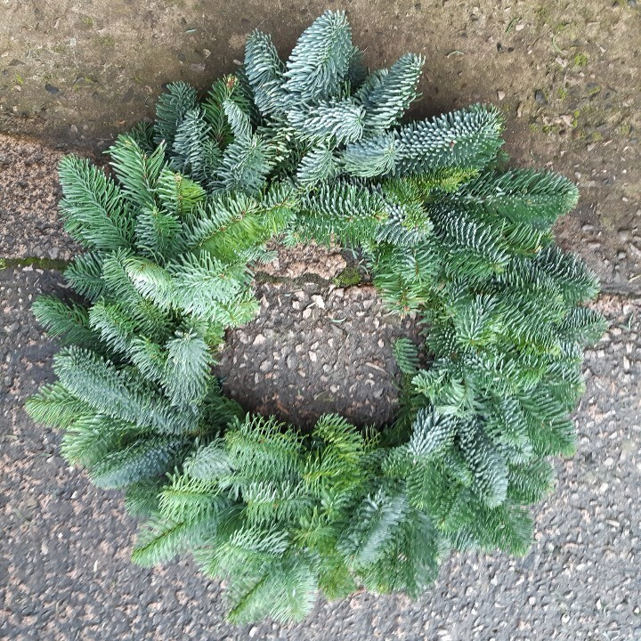 "Fresh spruce wreath bases 10""-20"" pre order now"