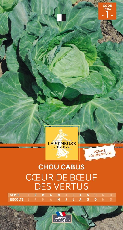 CHOU CABUS COEUR DE BOEUF DES VERTUS