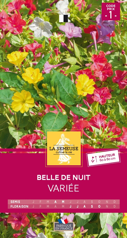 BELLE DE NUIT VARIEE