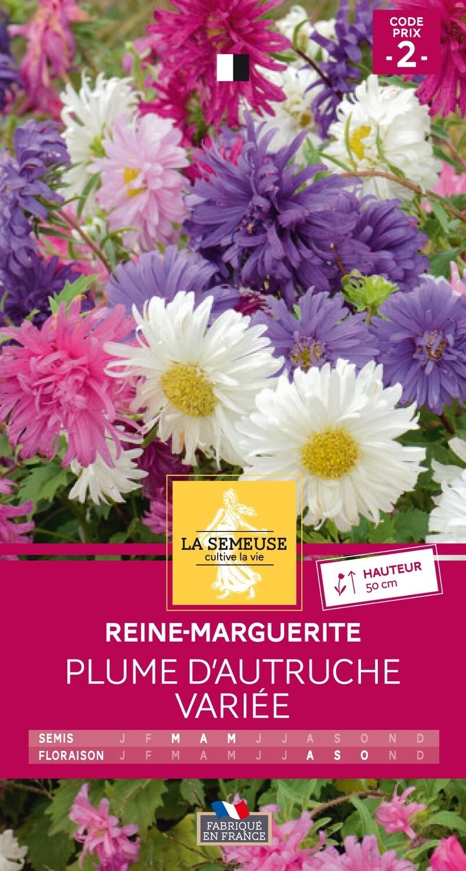 REINE-MARGUERITE PLUME D'AUTRUCHE VARIEE