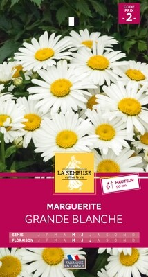 MARGUERITE GRANDE BLANCHE