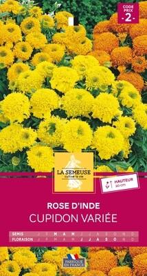 ROSE D'INDE CUPIDON VARIEE