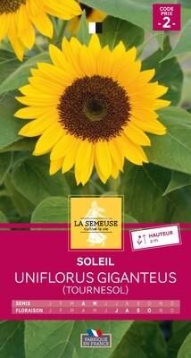 SOLEIL UNIFLORUS GIGANTEUS (TOURNESOL)
