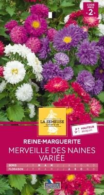 REINE-MARGUERITE MERVEILLE DES NAINES VARIEE