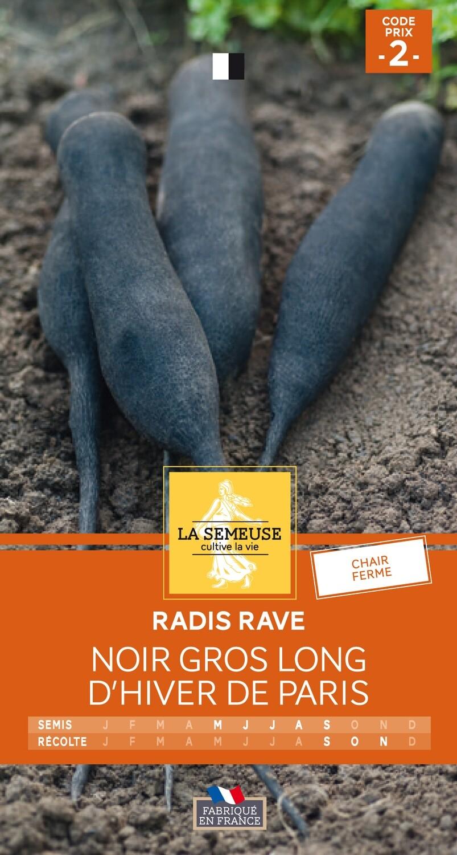 RADIS RAVE NOIR GROS LONG D'HIVER DE PARIS