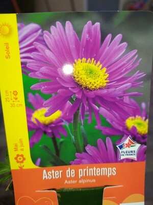ASTER DE PRINTEMPS