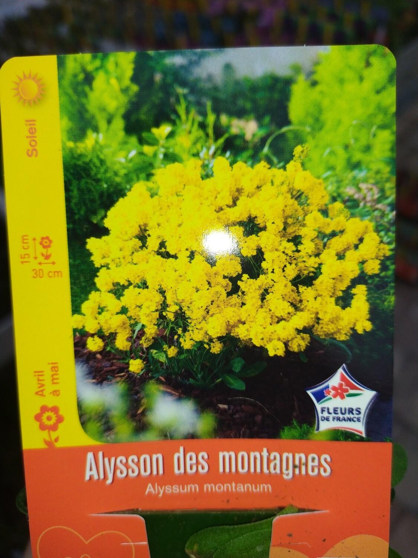 ALYSSON DES MONTAGNES
