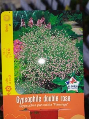 GYPSOPHILE DOUBLE ROSE