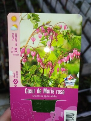 COEUR DE MARIE ROSE