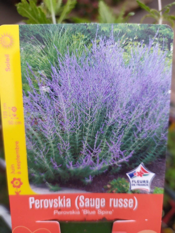 PEROVSKIA (SAUGE RUSSE)
