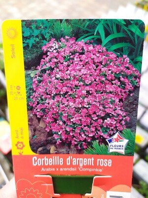 CORBEILLE D'ARGENT ROSE
